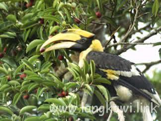 ネイチャーアイランド・ランカウイ島の自然と動物