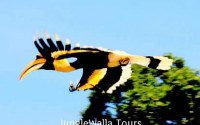 バードウォッチングツアー (Jungle Walla Tours)