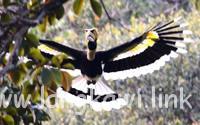 ランカウイ島に暮らす動物たち