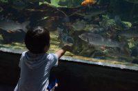 ランカウイ島の水族館、アンダーウォーター・ワールド (Underwater World)