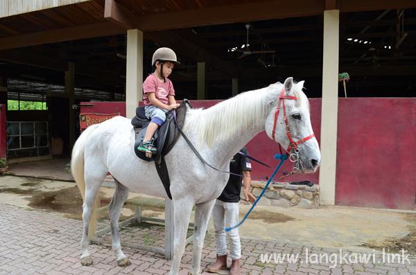 ランカウイ島で子供も楽しめる!おすすめ乗馬体験